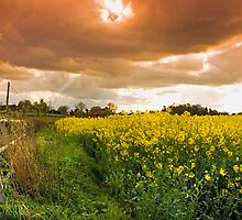 Cinamon Sky Over the Yellow Field by espanek