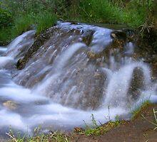 Bighill Springs by Barrie Daniels