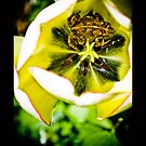 Yellow Photography Nature Animals Flower Toad Amphibian Sit Tulip by LongbowX