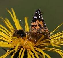 Competing For Nectar by Dave Godden