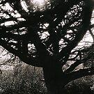 winter tree by jiriki
