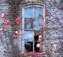 broken window, fall colors by Jennifer Hulbert-Hortman