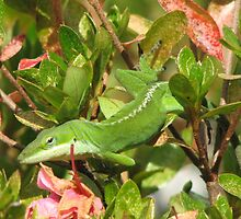 Anoles Found in Azaleas  by JeffeeArt4u
