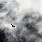 Storm Glider by nikspix