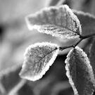 Frosty Leaves in Black and White by Michelle BarlondSmith