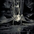 Water Lilly   by Christine  Wilson Photography