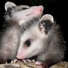 &#x27;POSSUM KIDS by Kay Kempton Raade