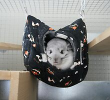 Chinchilla Chilling! by Claire Tennant
