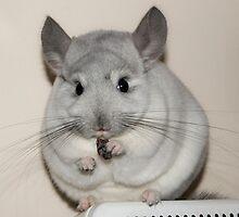 Bailey eating a raisin by Claire Tennant