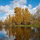 Fall Colors, Clouds and Western Gulls, Reflected in a Pond by Jeff Goulden