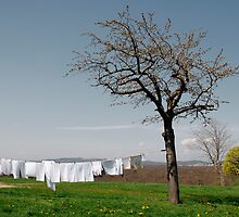 White Washing on Clothes Line  by jojobob
