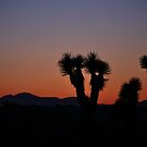 Desert Sunset Joshua Tree National Park  by John Anderson