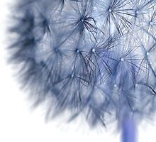 Inverted Dandelion by MartinWilliams