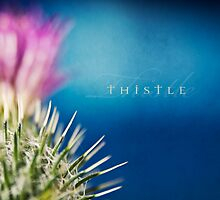 Scottish Thistle by StuartStevenson