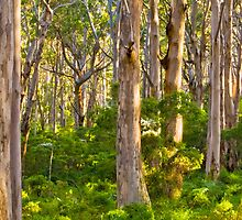 Boranup Forest, Margaret River, South Western Australia by Dave Catley