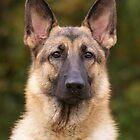 Yahtzee Portrait by Sandy Keeton