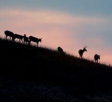 Sunset Stroll by Rodney55