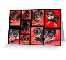 Clyde Collage - Cute Overload Greeting Card