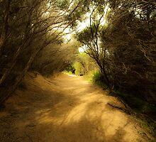 Pathway to the Beach by Caroline Gorka