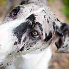 Giselle the Great Dane by Charlotte Reeves