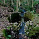 Lady Kennedys Bath in Dunottar Woods by Scott  Andrew
