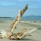 Driftwood at Fort Stevens by Rich Summers