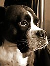 Arwen By The Window  -Boxer Dogs Series- by Evita