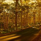 Boranup Forrest by Andrew  Semark