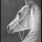 Arabian by waynea3