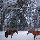 Horses In The Snow by Linda Miller Gesualdo