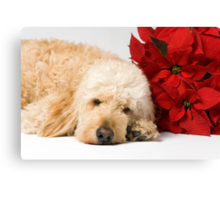 Please Come Home For Christmas Canvas Print