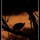 Guinefowl Sunset by Leon Rossouw