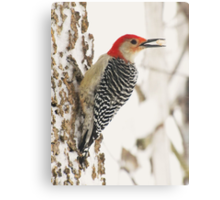 "Food ""To Go"" (Red-bellied Woodpecker) Canvas Print"