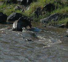 Survival Series, Masai Mera, Kenya 2 by Rocky  Robar