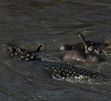 Survival Series, Masai Mara, Kenya 8 by Rocky  Robar