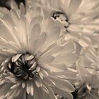 Old-fashioned Garden Glory by PhotosByLeila