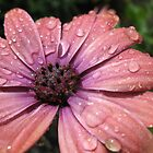 Wet Flower by GTPNISM0SKYLINE