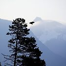 bald eagle launches, Howe Sound by Christopher Barton