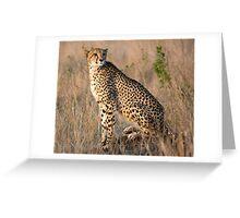 Male Cheetah Greeting Card
