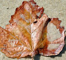 leaf on the beach by gillyisme53