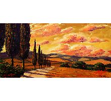 Tuscany Cypress Road Photographic Print