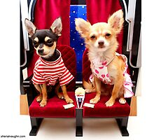 Dogs At The Movies-1 by Sherial Vaughn