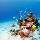 Underseascape by gardenofbeeden