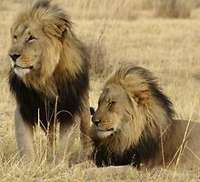 Waterberg Father and Son  by Yolande van der Merwe