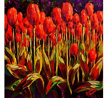 Red Tulips in the Light Photographic Print