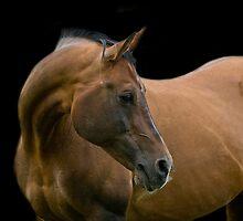 Stallion portrait by laurav