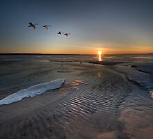 Swans Fly Along Little Traverse Bay by Robert deJonge