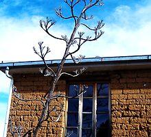Bolivian home... by Tamara Travers