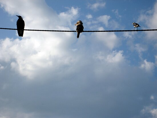 Birds on a Wire by giddyaunt