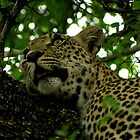 dappled Tamboti light - Karula by Pieter  Pretorius